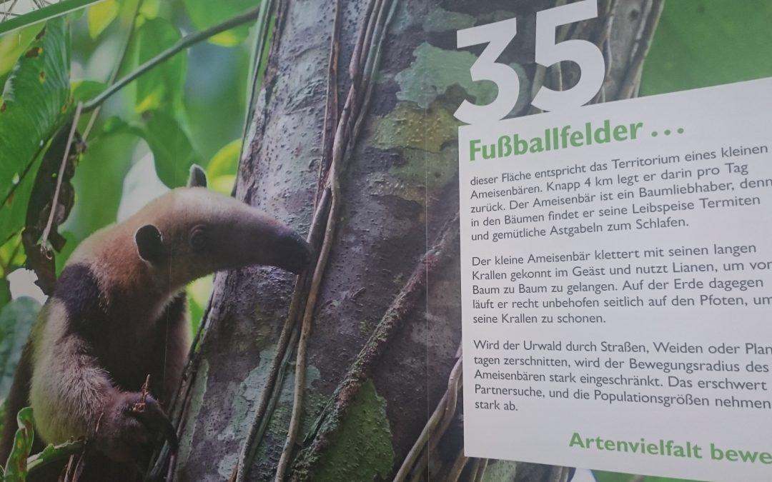Unser Wochenend-Tipp: Ameisen-Angeln auf unserem Aktionsstand im Palmengarten