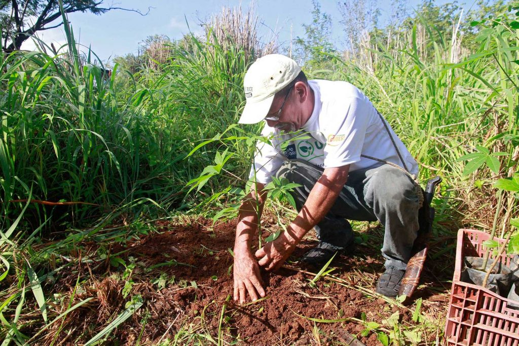 Regenwald Aufforstung