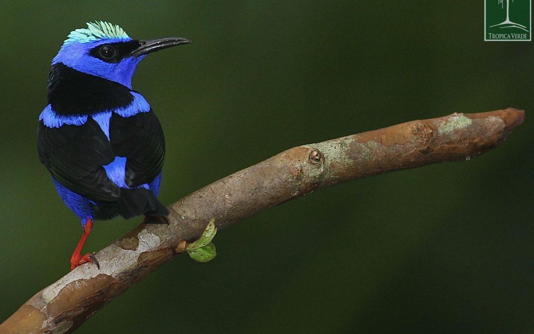 Geheimnisse im Regenwald: Was man auf einer Kurzreise durch Costa Rica so alles entdecken kann…