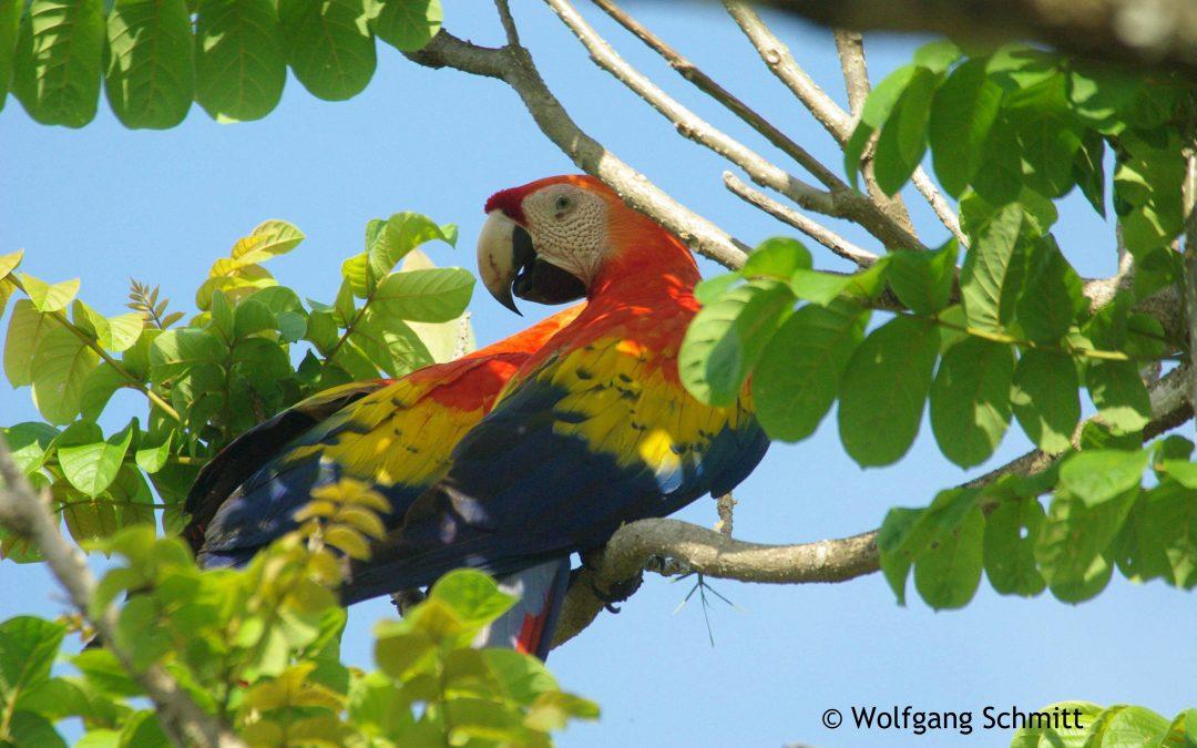 Costa Rica – Doku über ein weltbewegendes Land!