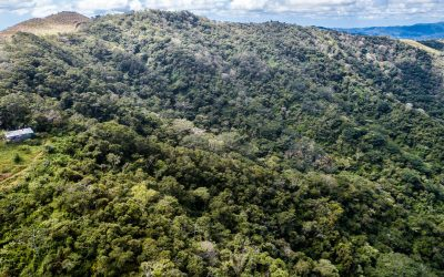 """Vortrag """"Tropica Verde-Naturschutzprojekte in Costa Rica – ein aktueller Überblick"""" am 16.6."""
