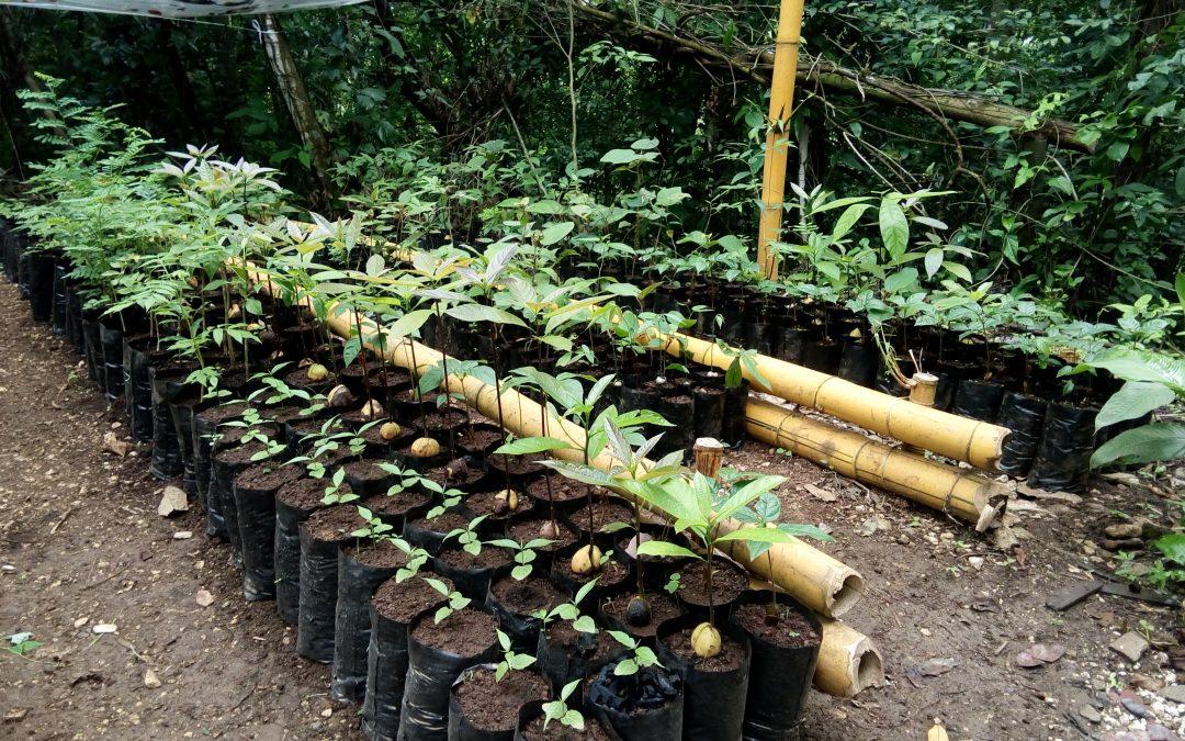 Baumschule für die Wiederbewaldung der Finca Alicia