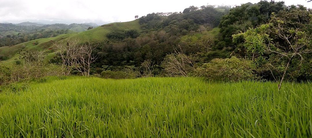 Plan für die Wiederbewaldung der Finca Alicia steht fest!