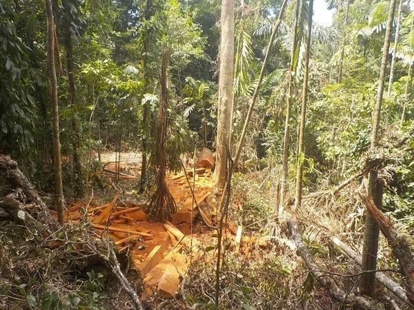 Baumräuber auf der Finca Curré unterwegs – drei Personen verhaftet