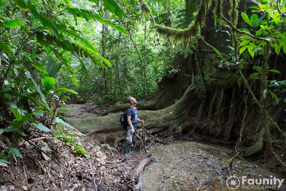 Neues im Blog von Faunity: Atemberaubende Fotos und hautnahe Berichte aus Tropica Verdes Projekten