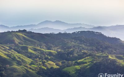 Hoffnung für einen ehemals abgeholzten und erodierten Regenwald