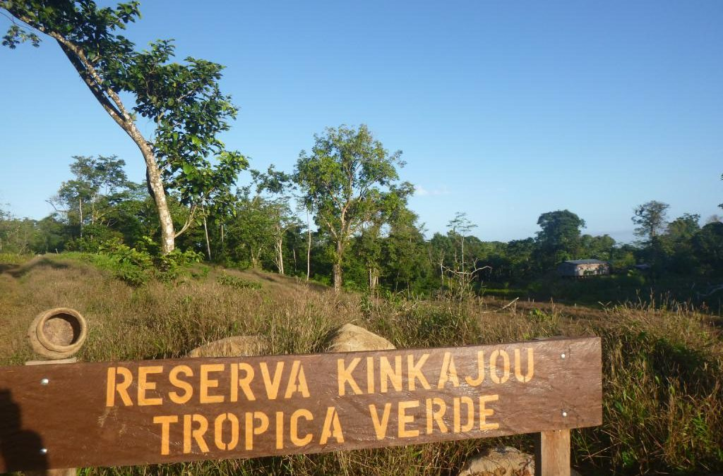 Besuch der Reserva Kinkajou – Ein Bericht von Tina Kitzing