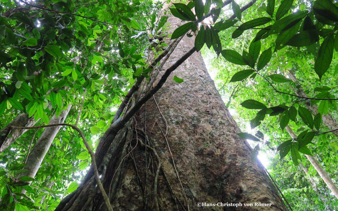 """""""30 Jahre Tropica Verde – 30 Jahre Erhalt der Biodiversität"""""""