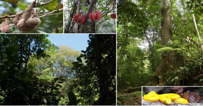 Regenwaldschutz gegen Wilderer und Holzeinschlag