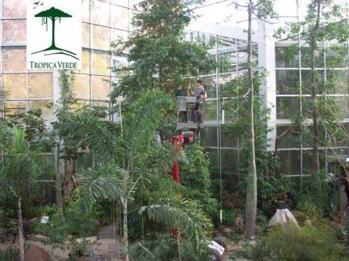Wer schön sein will, muss leiden! Dass mussten auch die Bäume des Monte Alto Beets beim jährlichen Pflegeschnitt erfahren!