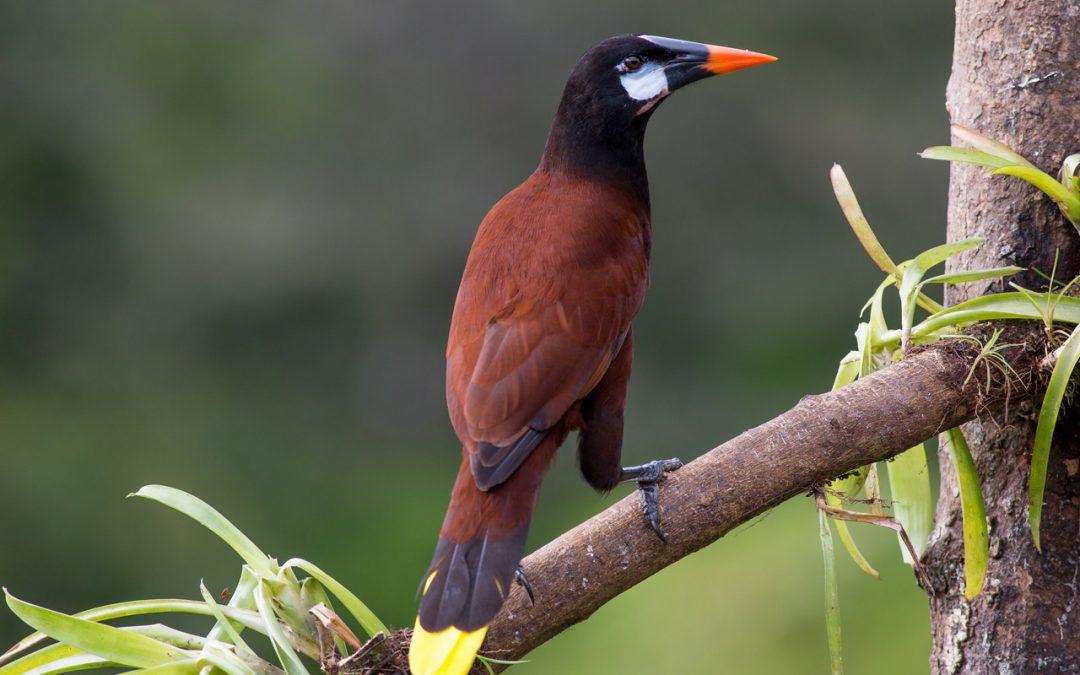 Futterbäume für exotische Vogelarten