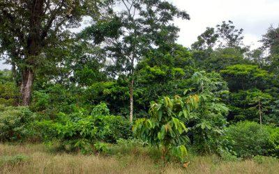 Welche Tiere verbergen sich in unserem Wald?